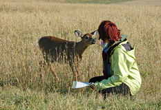 Deer petting stock images