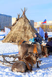 Deer and plagues of Nenets against the city Stock Photos