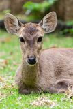 Deer portrait and close up at face. stock images