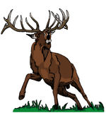Deer red Stock Images