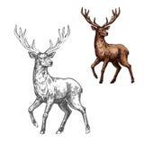 Deer, reindeer or elk sketch of wild mammal animal. Deer, reindeer or elk isolated sketch of wild mammal animal. Brown stag of adult deer with large antlers for vector illustration