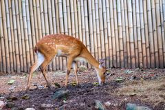 The deer is resting in the shade of wood. S royalty free stock photos