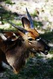 Deer resting. Stock Photo