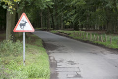 Deer in road - landscape Royalty Free Stock Images