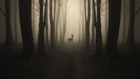 Deer on road in mysterious dark forest Royalty Free Stock Images