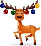 Deer Rudolf Stock Photography