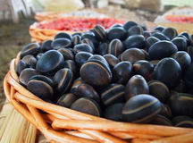 Deer's Eye Sea-Beans Mucuna Royalty Free Stock Image