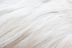 Deer's fur texture Royalty Free Stock Photo