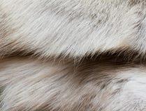 Deer�s fur texture Stock Image