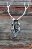 Deer's Head Royalty Free Stock Photos