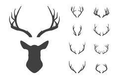 Deer S Head And Antlers Set. Stock Images