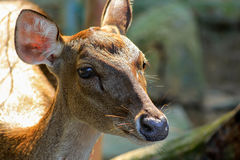 Deer's head Stock Photography