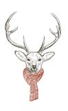 Deer in scarf. Pen and ink illustration of deer in scarf Stock Photo