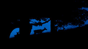 Deer shadows. Silhouettes of deers in Lyme Park Royalty Free Stock Photography
