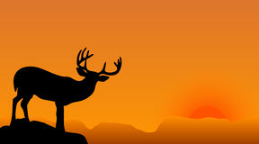 Deer. Silhouette with big horns on a sunset Royalty Free Stock Photos