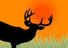 Deer. Silhouette with big horns on a sunset Stock Photos