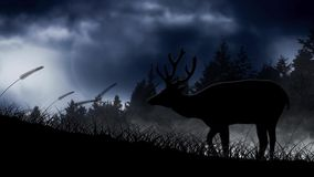 Deer Silhouette on a Hill in the Moonlight. Features the silhouette of a deer on a hill with pine trees behind and a full moon and moving clouds in the stock footage
