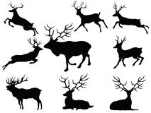 Deer silhouettes. Isolated black deer silhouettes from white background Royalty Free Stock Images