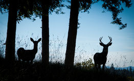 Deer Silhouettes Stock Photography