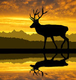 Deer. Silhouettes in the sunset Stock Photo