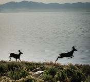 Deer Silhouettes Royalty Free Stock Photo