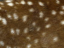 Deer skin Stock Photo