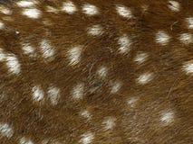 Deer skin. Brown and white deer skin Stock Photo