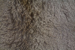 Deer skin background Royalty Free Stock Photo