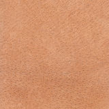Deer skin background texture Royalty Free Stock Photography