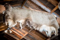 Deer Skin Hunting Cabin Stock Photo