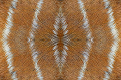 Deer skin Royalty Free Stock Image