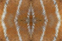 Deer skin. Real brown pattern of deer skin background Royalty Free Stock Image