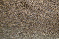 Deer skin texture abstract background. Stock Photography