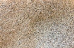 Deer skin texture Royalty Free Stock Images
