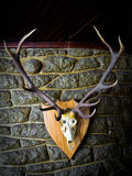 Deer skull. Against a stone wall - Bariloche - Patagonia - Argentina Stock Photography