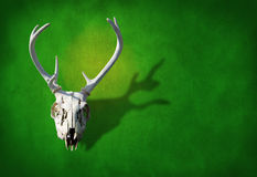 Deer skull on a earth green grunge background. Deer skull on a earthy green background representing hunting, animals, nature, wildlife, nature preservation and Stock Photos
