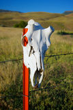 Deer Skull on Fence Stock Photography