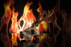 Deer skull. On fire on black background Royalty Free Stock Photo