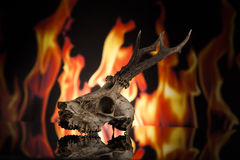 Deer skull. On fire on black background Royalty Free Stock Images
