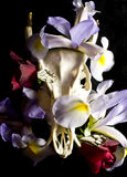 Deer Skull with Flowers and Butterflies Royalty Free Stock Images