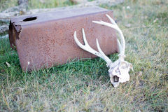 Deer Skull found in a Pasture Stock Image