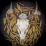 A deer skull on a pile of bullets. Color Royalty Free Stock Photography