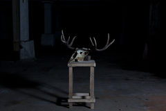 Deer skull on a stand in a dark Stock Photos