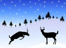 Deer in Snow 2 Stock Images