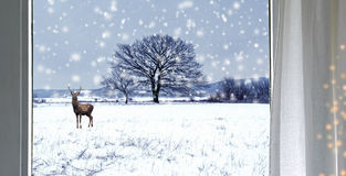 Deer in the snowfall Stock Photography