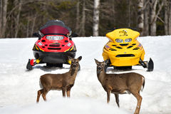 Deer and snowmobiles Royalty Free Stock Photo
