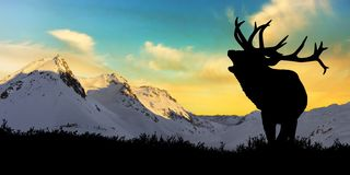Deer with snowy mountains in the background stock photography