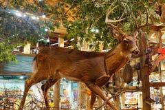 A deer specimen Stock Photography