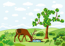 Deer spring and tree Royalty Free Stock Photo