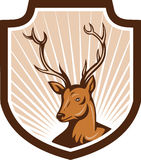 Deer Stag Buck Antler Head Shield. Illustration of a stag deer buck head facing front set inside shield crest done in cartoon style stock illustration